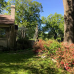 High Point Terrace Tree Removal